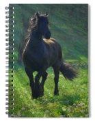 Friesian Sun Spiral Notebook