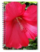 Frilly Red Hibiscus Spiral Notebook