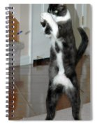 Frisbee Cat Spiral Notebook