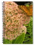 Fritillary On Flower Spiral Notebook