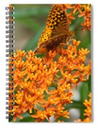 Frittalary Milkweed And Nectar Spiral Notebook