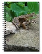 Frog On A Rock Spiral Notebook
