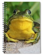 Frog On Flat Stone B  9871 Spiral Notebook