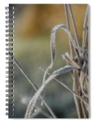 Frost On The Stems Spiral Notebook