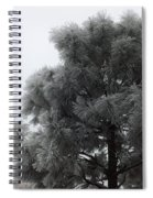 Frosted Pine Spiral Notebook
