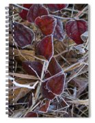 Frosted Red Green Briar Spiral Notebook