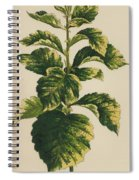 Frosted Thorn, Crataegus Prunifolia Variegata Spiral Notebook
