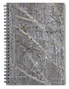Frosty Birch Tree Spiral Notebook