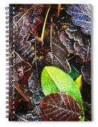 Frozen Oak Leaves, Glenveagh National Spiral Notebook