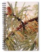 Frozen Pine Spiral Notebook