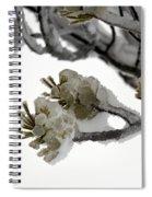 Frozen Pines 1 Spiral Notebook