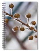 Frozen Seed Capsules In Time Spiral Notebook