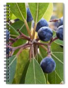Fruit And Leaves Of The Red Bay Spiral Notebook