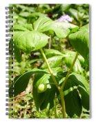 Fruit Of The Mayapple Spiral Notebook