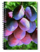 Fruit Plums  On Tree Spiral Notebook