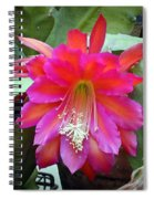 Fuchia Cactus Flower Spiral Notebook