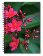 Jatrohpa Bush Blooms Spiral Notebook