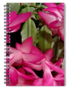 Fuchsia Christmas Cactus Spiral Notebook