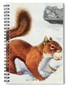 Fuertes, Louis Agassiz 1874-1927 - Burgess Animal Book For Children 1920 Red Squirrel Spiral Notebook
