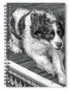 Full Tilt - English Springer Spaniel Bw Spiral Notebook
