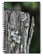 Fungi Green Spiral Notebook
