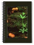 Fungi Times Three Spiral Notebook
