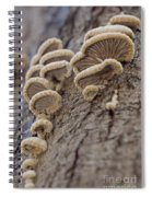 Fungui Growing On A Tree Trunk Spiral Notebook