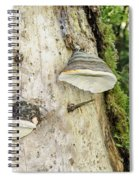 Fungus Grows On A Tree Trunk Spiral Notebook