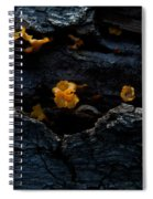 Fungus On Log Spiral Notebook