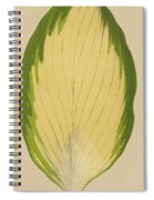 Funkia Sieboldiana Variegata Spiral Notebook
