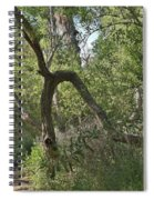 Funky Tree On Trail In Peters Canyon Spiral Notebook
