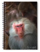 Funny Baboon Spiral Notebook