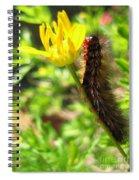 Furry Caterpillar On A Yellow Flower Spiral Notebook