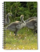Fuzzy Fowlings Spiral Notebook