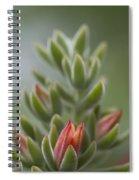 Fuzzy Orange Succulent Blossom Spiral Notebook