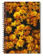 Gaia's Gold Spiral Notebook