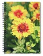 Gaillardia Flowers Spiral Notebook