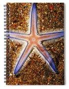 Galapagos Colorful Seastar Spiral Notebook