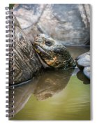Galapagos Giant Tortoise In Pond Amongst Others Spiral Notebook