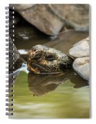 Galapagos Giant Tortoise In Pond Behind Another Spiral Notebook