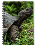 Galapagos Giant Tortoise In Profile In Woods Spiral Notebook