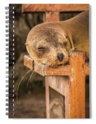 Galapagos Sea Lion Sleeping On Wooden Bench Spiral Notebook