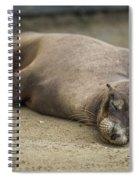 Galapagos Sea Lion Sleeps On Sandy Beach Spiral Notebook