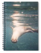 Galapagos Sealion Spiral Notebook