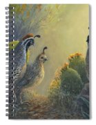 Gambel's Quail - Early Light Spiral Notebook