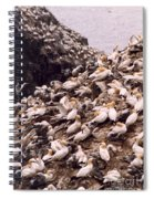 Gannet Cliffs Spiral Notebook
