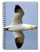 Gannet In Flight Spiral Notebook