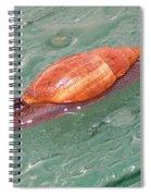 Garden Snail 4 Spiral Notebook