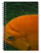 Garibaldi 3 Spiral Notebook