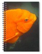 Garibaldi Spiral Notebook